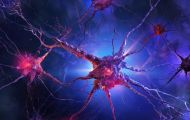 COVID-19 có làm thay đổi hệ thần kinh giao cảm?