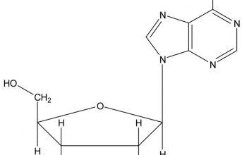 Cordycepin - Hoạt chất có giá trị cao nhất trong y học hiện nay