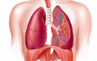 Tìm hiểu về bệnh phổi và cách chữa trị bệnh phổi trong y học hiện nay