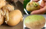 Chuyên gia chỉ rõ loại rau củ mọc mầm hại như thuốc độc và những loại quý hơn thuốc bổ