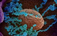 Hai đột biến của SARS-CoV-2 có thể thoát khỏi các kháng thể