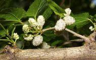 Bài thuốc phòng trị viêm phế quản mùa thu - đông
